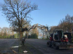 Verwijderen bomen uit border en plantklaar maken